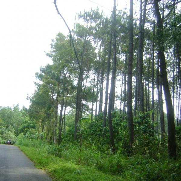 Kebun Buah Nusantara Dlingo