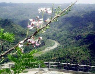 kebun buah mangunan bantul yogyakarta