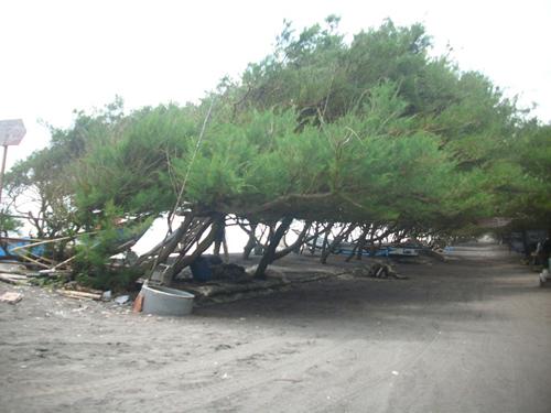 Pantai Kuwaru paket wisata yogyakarta