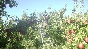Agro Wisata Apel