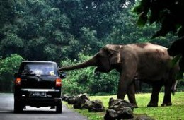 Taman Safari Indonesia II Prigen