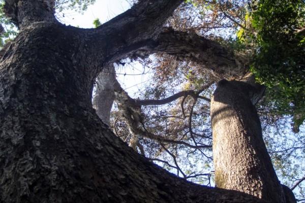 Hutan Wonosadi